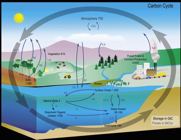 The carbon cycle reynolds continuing medical education more about ccuart Gallery